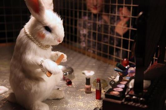 Jaká kosmetika je testovaná na zvířatech?